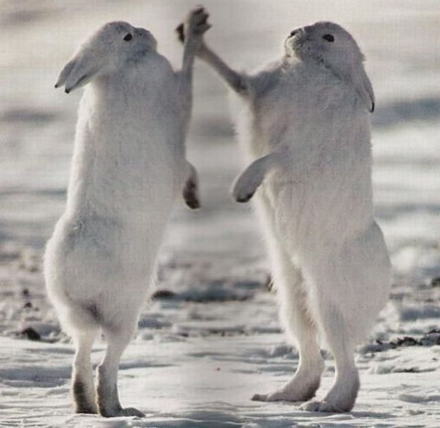 rabbit-high-five