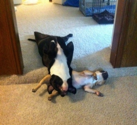 funny-sleeping-animals-dogs-09