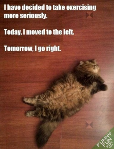 funny-animals-exercising-5-383x500