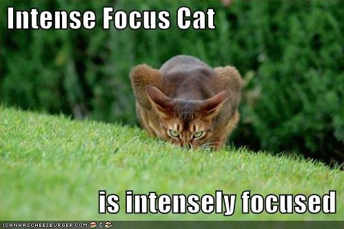 focus3