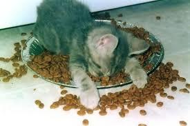 tiredcat